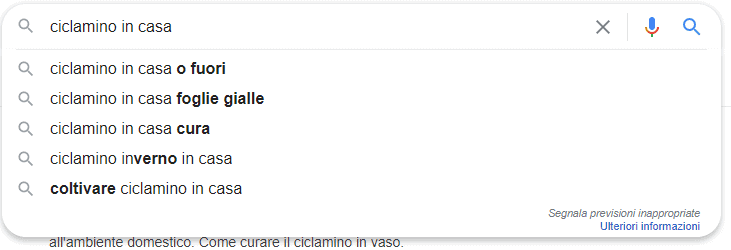esempio query google  con keyword ciclamino in casa